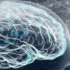 3d image of brain depicting damage from heroin